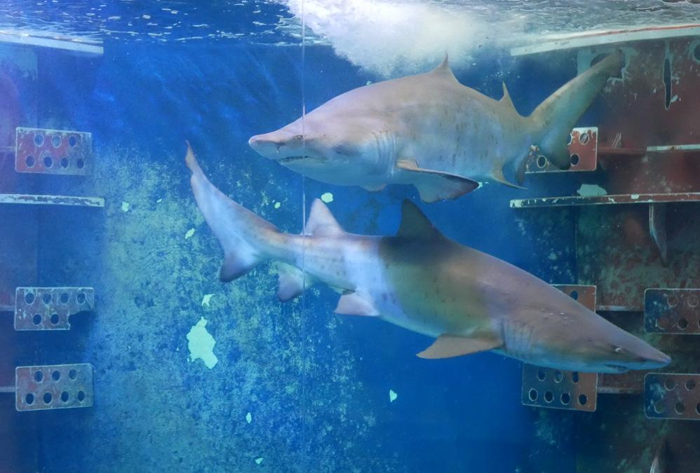 Le grand Aquarium