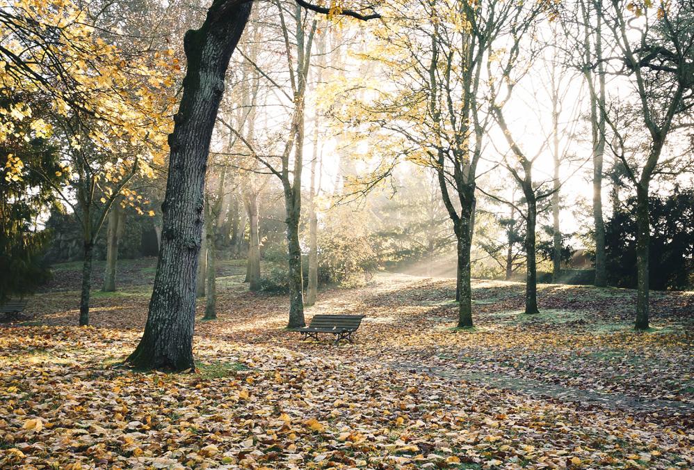 Parc des chênes